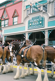 Clydesdales at Horn's Bar